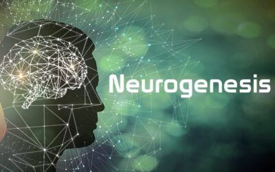 Neurogenesis: How to Increase It For More Brainpower